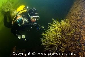 Бодяга под водой. Ценный дар озера Сергеевичское – Бодяга.