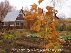 Осень на даче, Прошлой осенью на даче