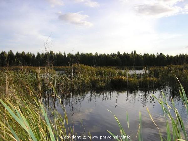 Разливы Сергеевичского озера - рай для водоплавающих птиц!