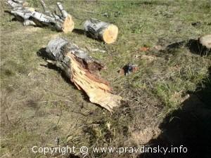 Спилено огромное количество деревьев