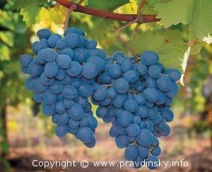 Виноград - Как размножать виноград