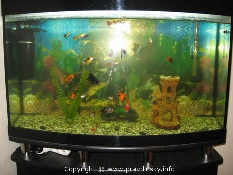 Аквариум начинающего аквариумиста без ошибок