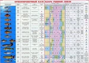 Настольный календарь рыболова на 2012 год