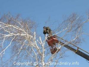 Спиливание старых и аварийных деревьев в Руденске, сел Березовка, Вороничах, Васильках и Цитве