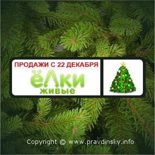 Где же купить живую новогоднюю елку?