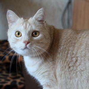 Фото кошки после стерилизации